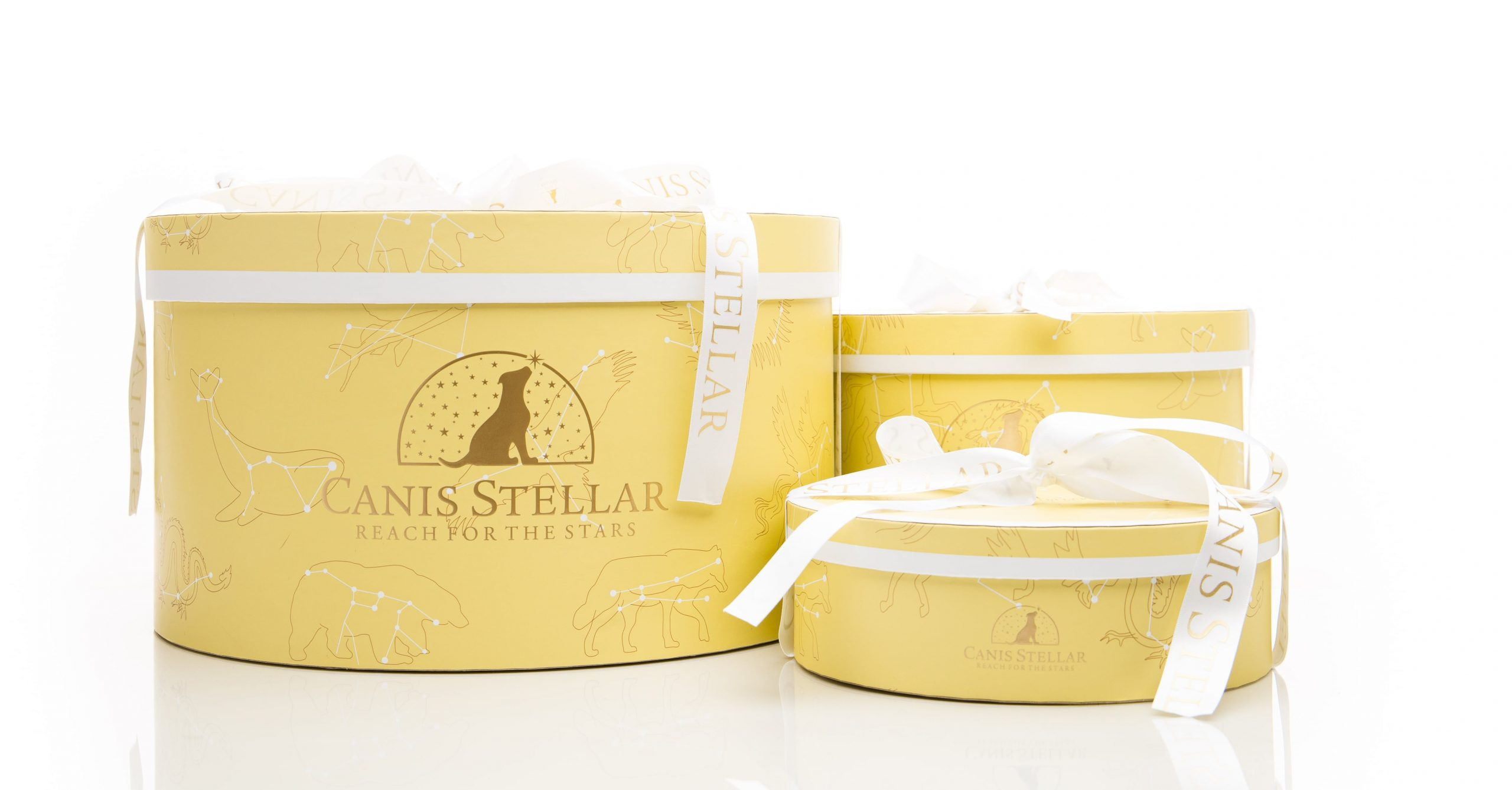 Canis Stellar - Gift Boxes for dogs with satin ribbon bow