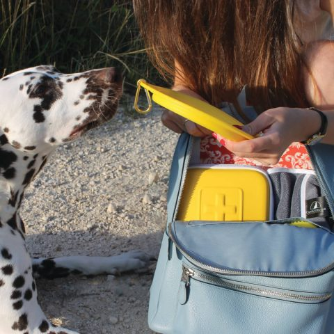 Dalmatian with travel set and first aid for pets
